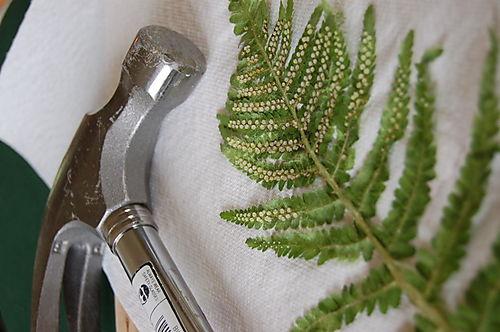 Fern tools