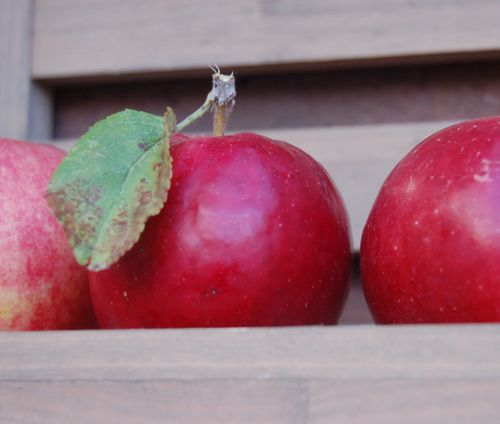 Brick red apples