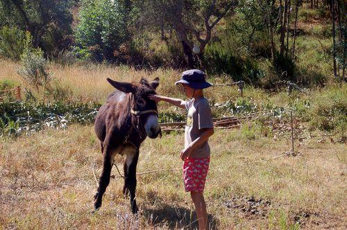 Donkey chum