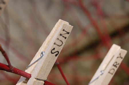 Pegs_closeup